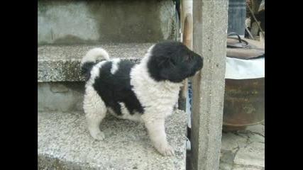 Myyy Sweet Dog - - Бъки