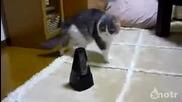 Много се дразни тази котка