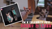 I'm a Celebrity Pet! Instagram's Sphynx cats who'll rule the world