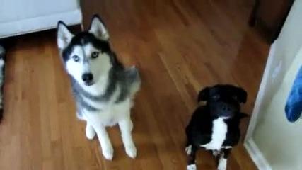 Две кучета правят номера