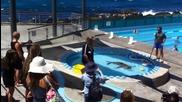 Нахален тюлен окупира басейн