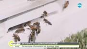 Градското пчеларство като нова мода