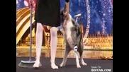 Страхотно танцуващо куче