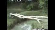 Дете Пада В Река