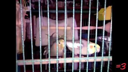 Bird Secks!!!