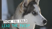 Sled Dog Day: 3 amazing things you didn't know