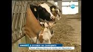 Русия спира вноса на храни от ЕС и САЩ - Новините на Нова