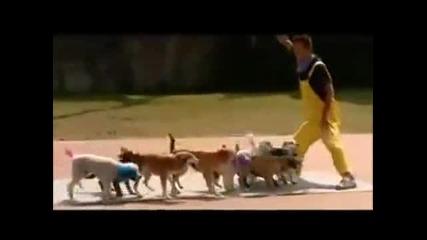 Невероятно! 13 кучета скачат на въже за световен рекорд