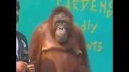 маймуна която прави номера