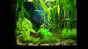 My home aquarium 3