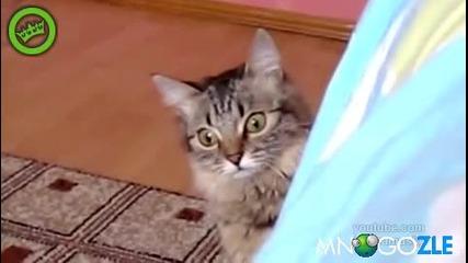 Котето на Чък Норис