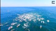 Страхотни кадри на делфини, заснети с дрон