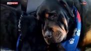 Куче се разплака за брат си ,с който са били заедно цял живот