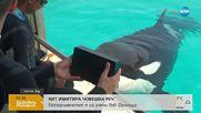 Научиха кит да имитира човешка реч