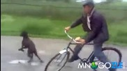Куче пребива чичка с колело