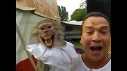 Маймуна пищи като собственика си.