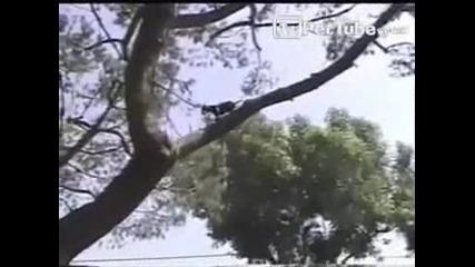 Куче се катери по дървета