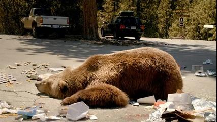 Много яка реклама с луда мечка