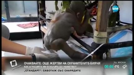Как се гледат новородени маймунки?