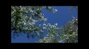 С аромат на акация - музика Оливър Шанти