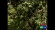 Guns N Roses - Dont Cry (+ Превод) High-Quality