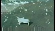 Сръбска версия - Сашо Роман - Мой Ангеле - Aco Pejovic - Ako me volis idi od mene