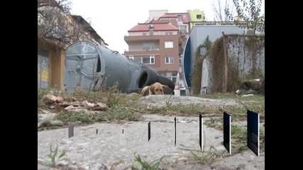 Глоби до 500 лв. за хранене на улични животни във Варна