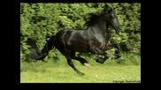 Най - красивия кон..! ^frison^