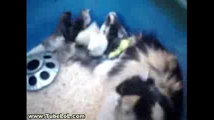 Разбирателство Между Котка И Пилета