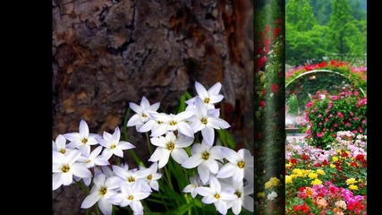 музика с цветя- 03