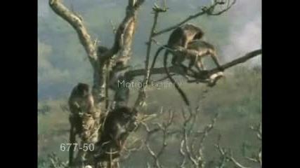 Маймунски Секс