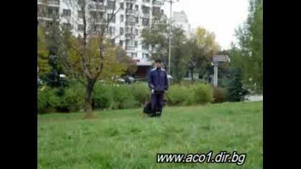 Dogtraining, Обучение На Немска Овчарка