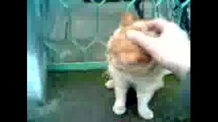 да си поиграеш с котето на Коледа