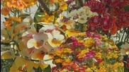 Duelul Florilor Virag Parbaj