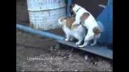 Куче Оправя Котка