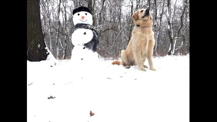 Рей и Чарли на разходка в гората :))