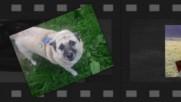 Hundebetreuung Odenwald - Liebevolle Hundebetreuung und Hundepension in Wahlen