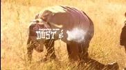 Nwd10 Dust And Bones - Freeride Entertainment