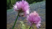 За цветята растящи във вода