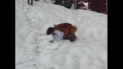 Едно куче което не си губи времето в приказки (смях)
