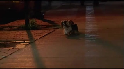 превод ! двете кученца от филма Sharpay's Fabulous Adventure ! Baby