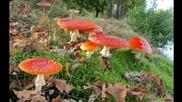 В гората за гъби... ...(music Eugen Doga)... ...