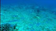 Светът на океаните 3D (2009) / Oceanworld 3D (2009) - целия филм - bg audio
