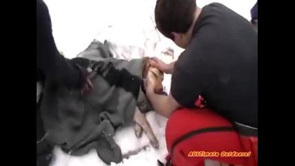 Куче спасено от Замръзнала река