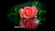 Виктор Королев - Алая роза - Превод