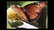 Тайната градина – Серенада за пролетта
