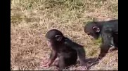 Бутни Другарче...упс Маймунка