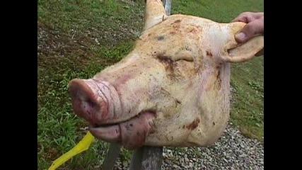 Vaginal Butchery - Una Mascara Sado Hecha