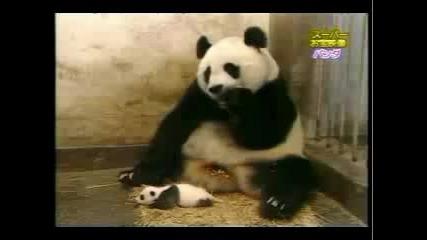 Funny Panda lazer sneeze