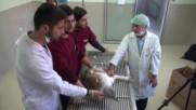 Turkey: World's biggest flying bird found injured in Anatolia